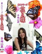 花と蝶-1374