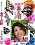 花と蝶 Vol.1302 京香36歳 - 無料アダルト動画付き(サンプル動画)