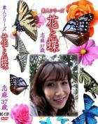 花と蝶-1381 - 無料アダルト動画付き(サンプル動画)