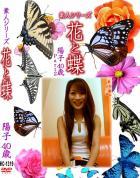 花と蝶 Vol.1319 陽子40歳 - 無料アダルト動画付き(サンプル動画)