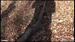 【個撮4】県立K2現役モデルパイパン② 野外露出で生ハメ - 無料アダルト動画付き(サンプル動画) サンプル画像7